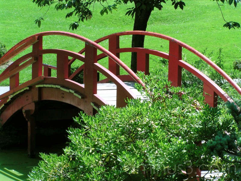 bridge, japanese garden, garden