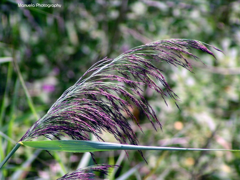grass, plant, green, purple