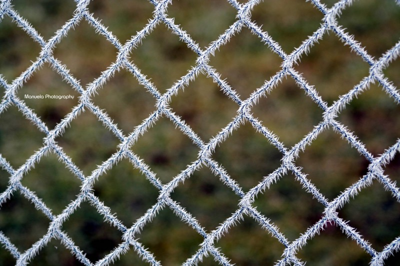 frost, ice, winter, cold, fence, metal