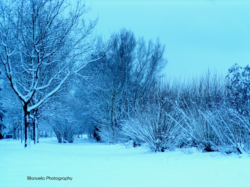 blue, snow, winter, cold, stillness