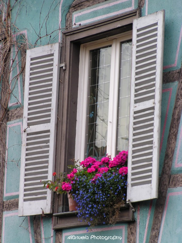 window pane flowers colmar france alsace