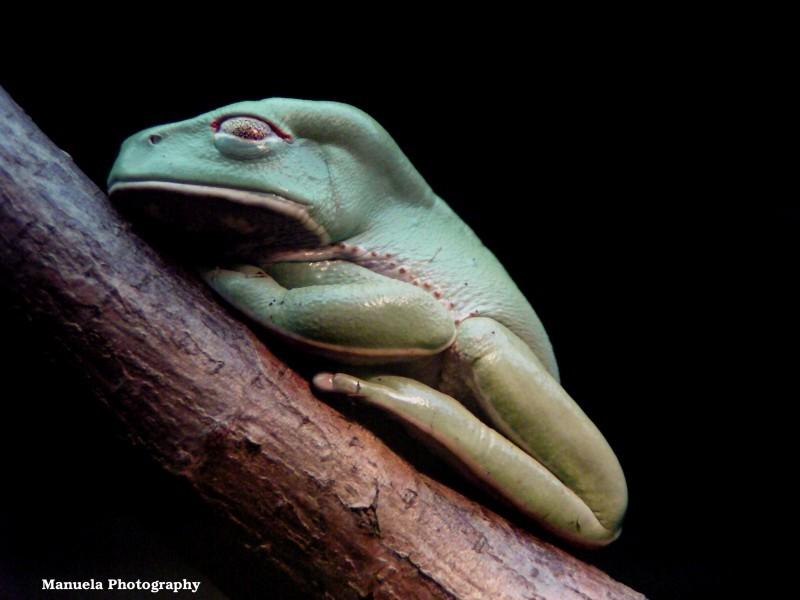 frog tropics zoo animal green