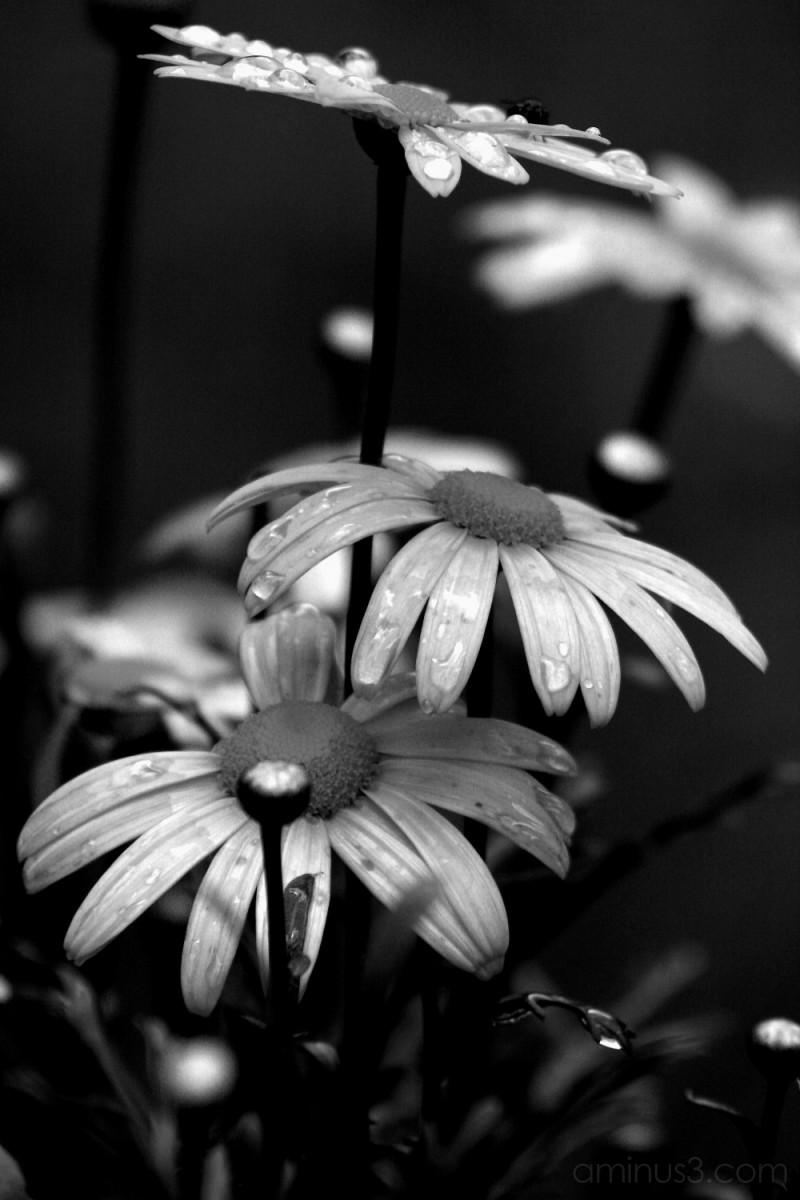 bloom flowers gardens palace germany linderhof