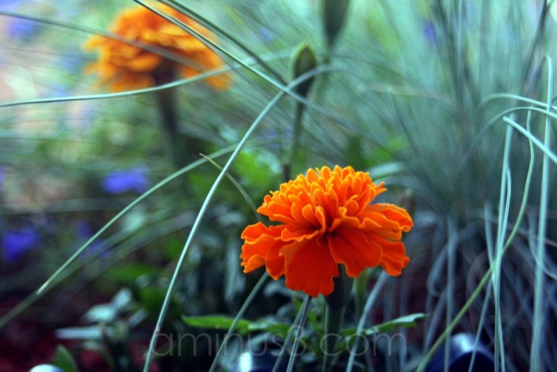 bloom flower garden grass spring orange