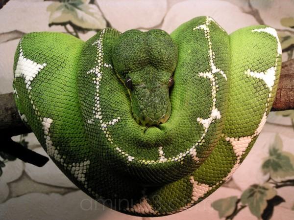 animal reptile germany snake oberammergau