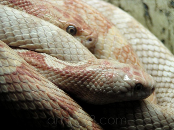 animal reptile snake germany oberammergau