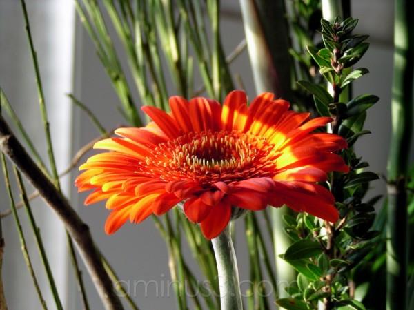 orange, bloom, flower, spring, bouquet, light