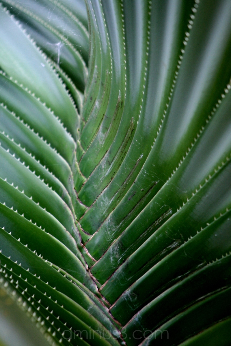 tree flora cactus needles trunk log palmengarten