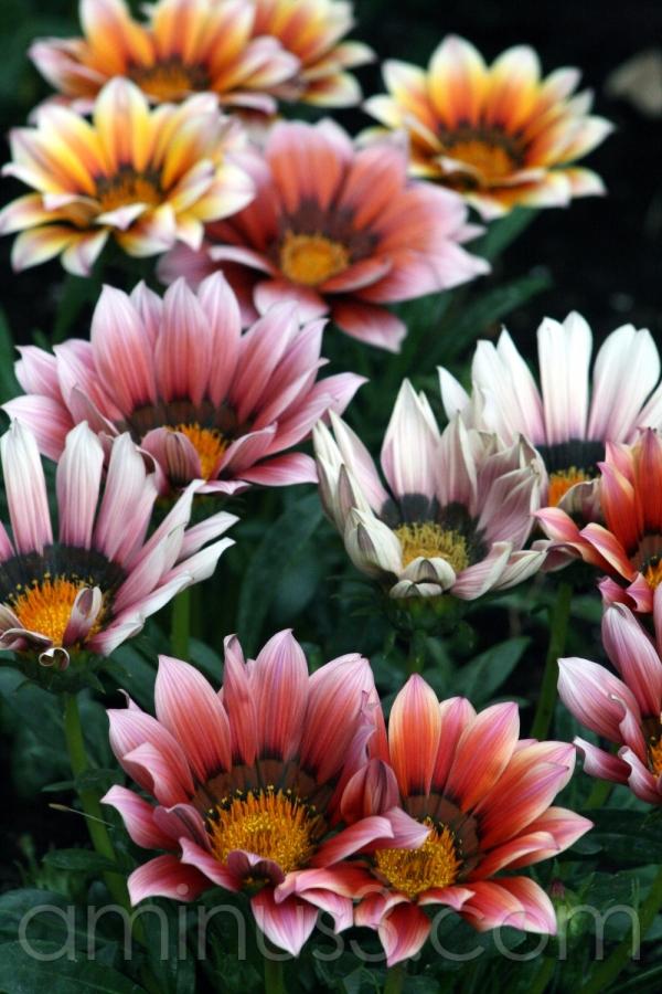 bloom flower multicolour field spring sunny