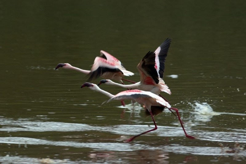 flamingo crater lake naivasha