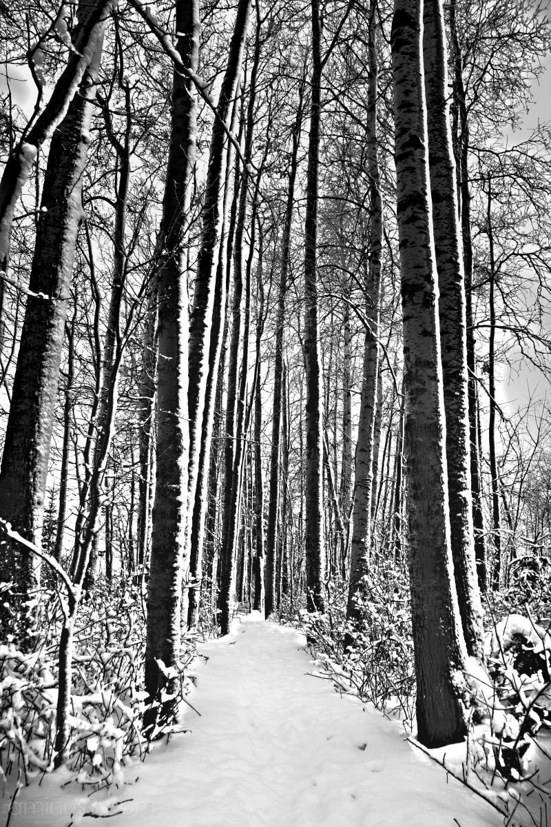 Wintery path through the trees