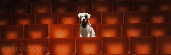 Dog sitting in an empty theatre