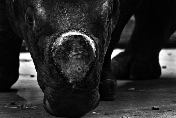 Rhino Eyes