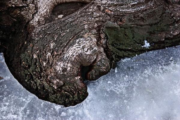 Tree-Iced