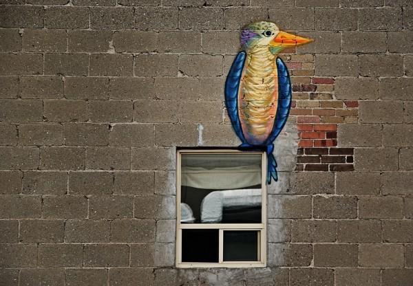 Bird outside the window