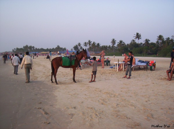 Horse rides on the Majorda Beach, Goa, India