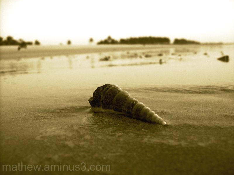 Sea shell Goa