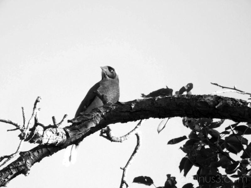 About a bird