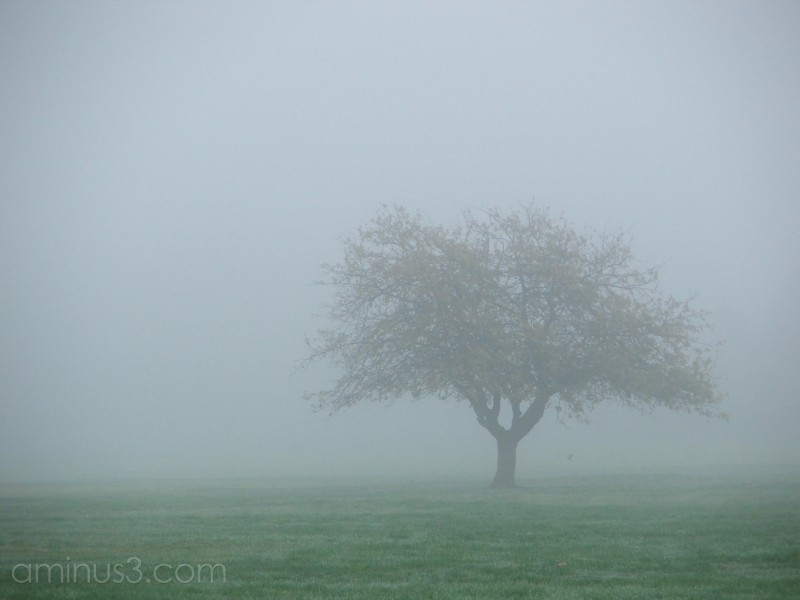 Foggy morning 1