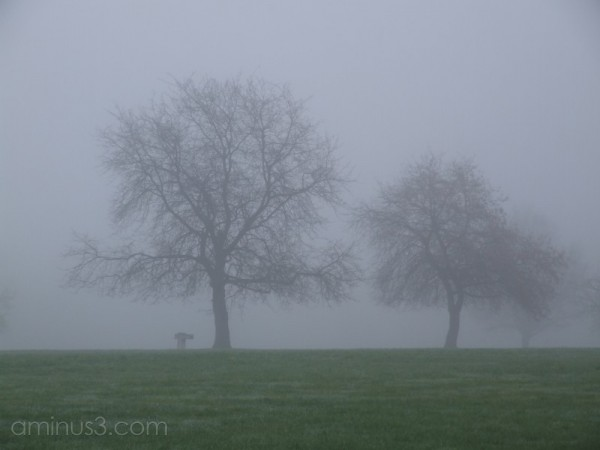 Foggy morning 2