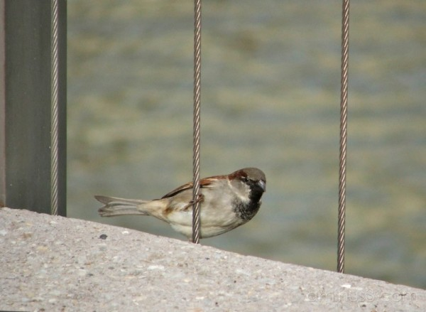 The humble sparrow 2
