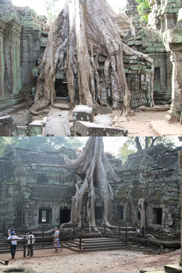 Angkor: Ta Prohm (Before and after)