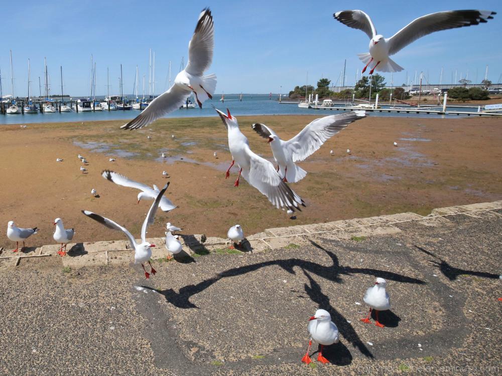 Argument over landing rights