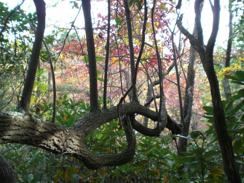 strange tree