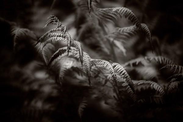 Fern in garden.