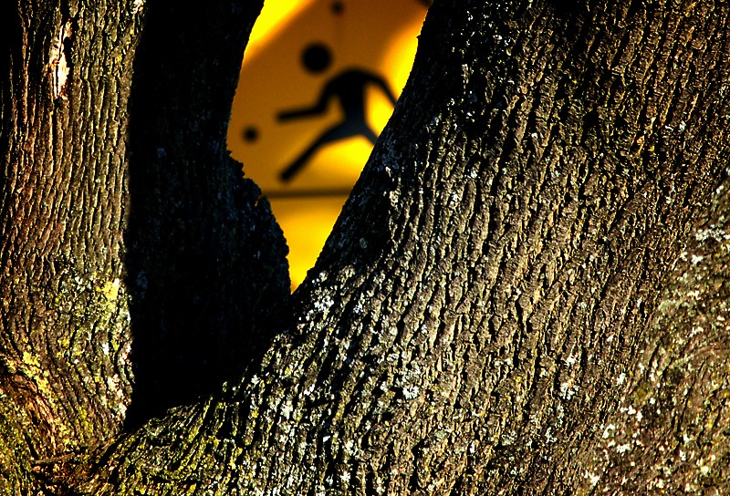 Caution sign behind tree.