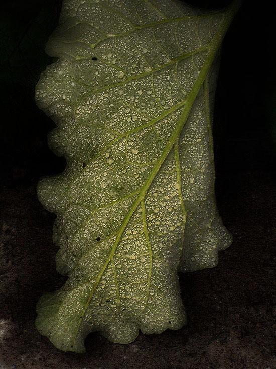 Wet leaf.