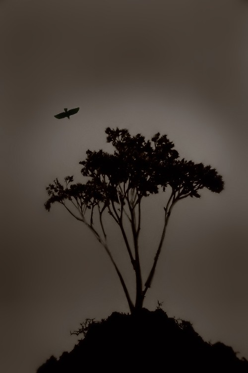 Tree and crow.