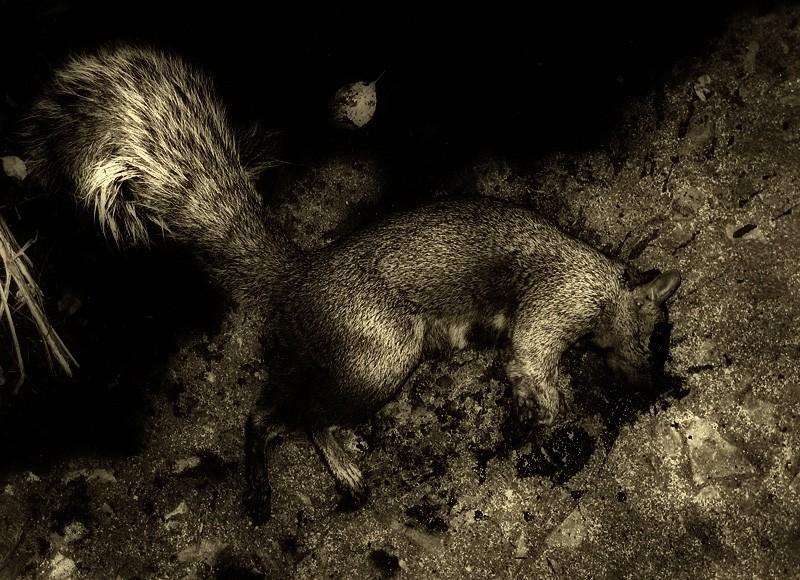 Death of a Squirrel