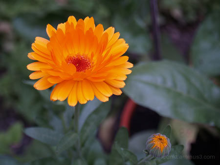 orange!!!!!!
