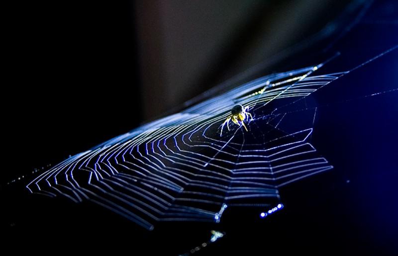 Spider under a spot light