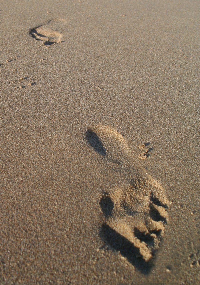 footprints on a Pescadero Beach