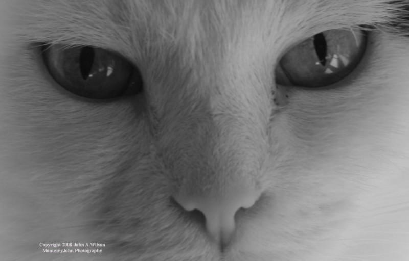 Bella The Attack Cat in a Stare Down