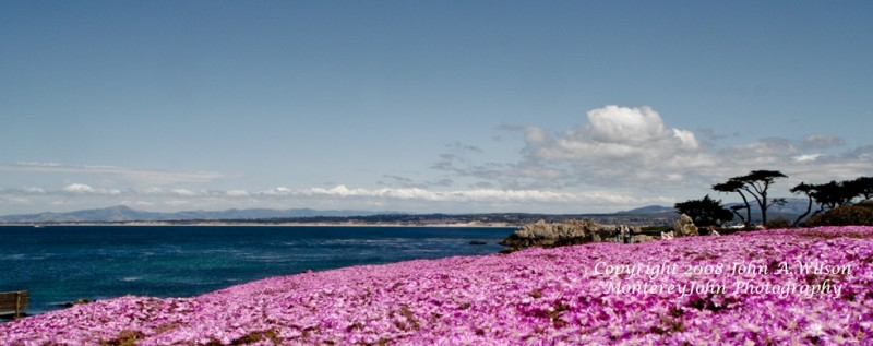 Pacific Grove in Bloom