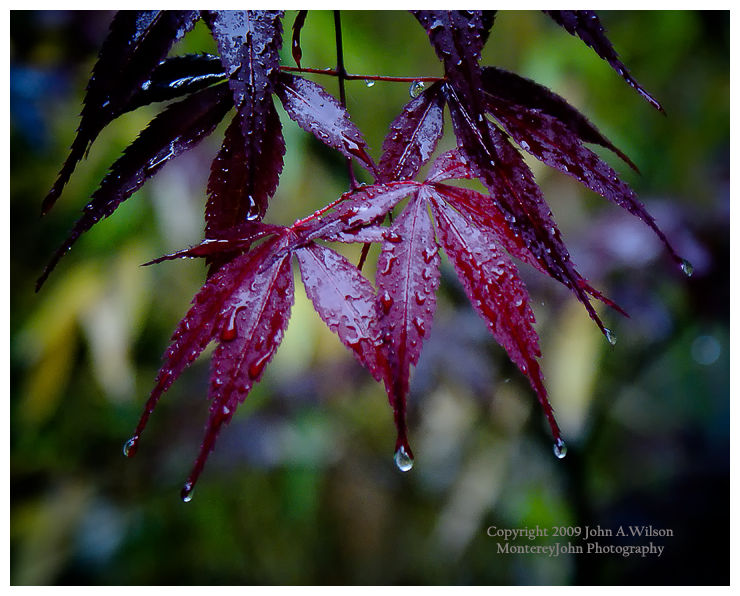 Raindrops on leafs