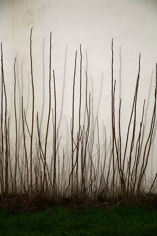 MnX photo abstract plants.