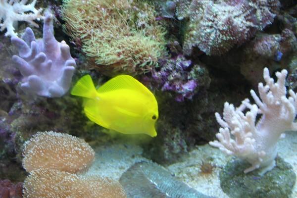 Viver num aquário