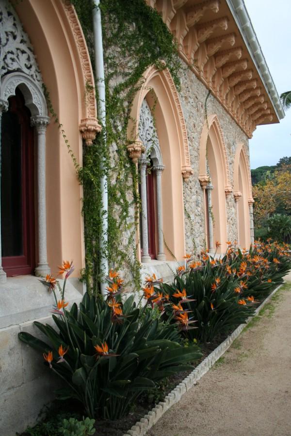 Estrelícias, Palácio de Monserrate, Sintra
