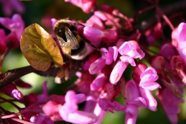 Uma abelha atarefada