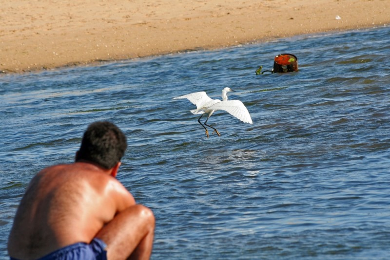 praia mar lixo garça algarve