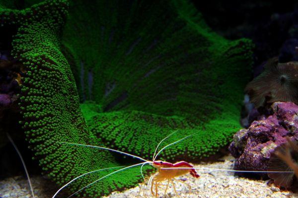 camarão oceanario