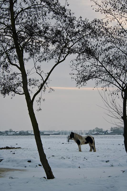 ameide holanda neve inverno cavalo