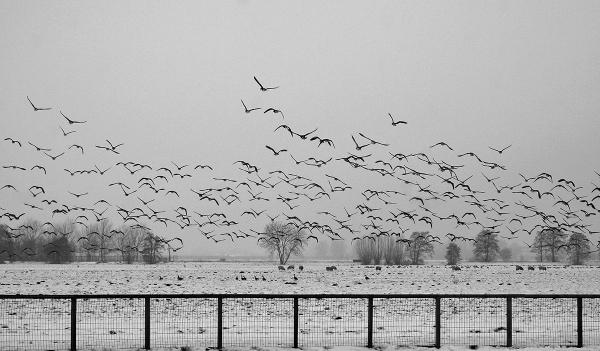 holanda ameide neve inverno ave