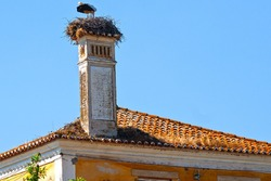 Stork - in chimney