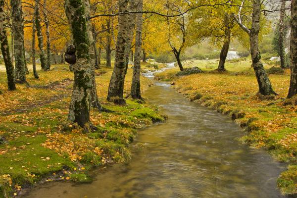 serraestrela covão-da-ametade chuva outono
