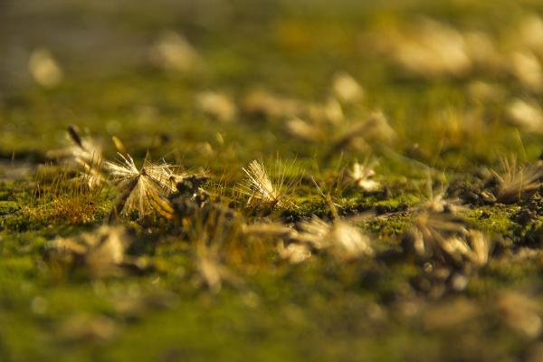 Minúsculas sementes